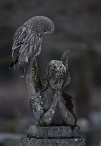 Arto Leppäsen Rukoushetkessä pöllö on istahtanut enkelipatsaan siivelle ja katsoo enkeliä alaspäin.